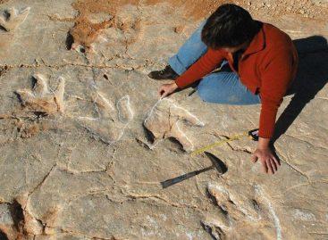 Hallan en Portugal 700 huellas dedinosaurios que comían peces
