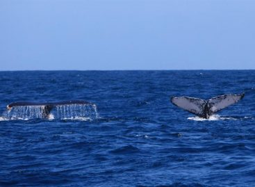 Rechazada iniciativa para crear santuario de ballenas en el Atlántico