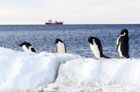 El océano Antártico albergará la mayor reserva marina del mundo
