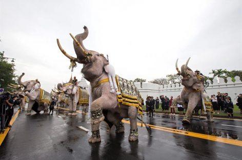 Formación de elefantes presentó sus respetos al difunto rey de Tailandia