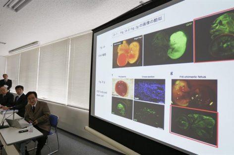 Japón empleará la inteligencia artificial para desarrollar nuevas medicinas