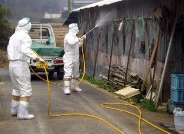 Japón en alerta máxima por gripe aviar tras detectar cepa contagiosa