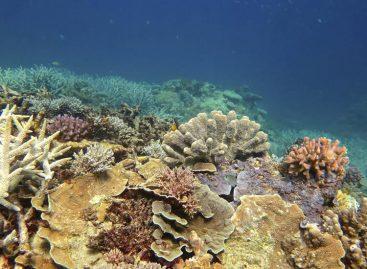 Gran Barrera australiana en riesgo de ser declarada patrimonio en peligro