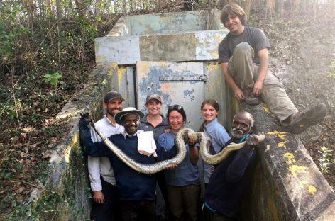 Cazadores de serpientes de la India limpian de pitones los Everglades