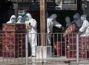 Nueva mutación del virus de la gripe aviar podría resistir a los antivirales