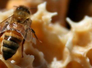 Un hombre murió en Los Santos tras ser picado por abejas africanizadas
