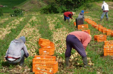 Productores agropecuarios de Los Santos preocupados por sequía
