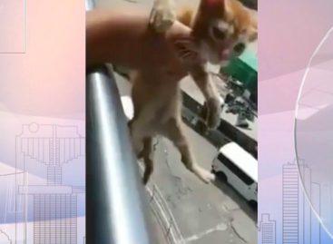 Colegio Gastón Faraudo anunció estrictas sanciones contra estudiantes que arrojaron un gato