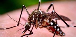 dengue en Panamá