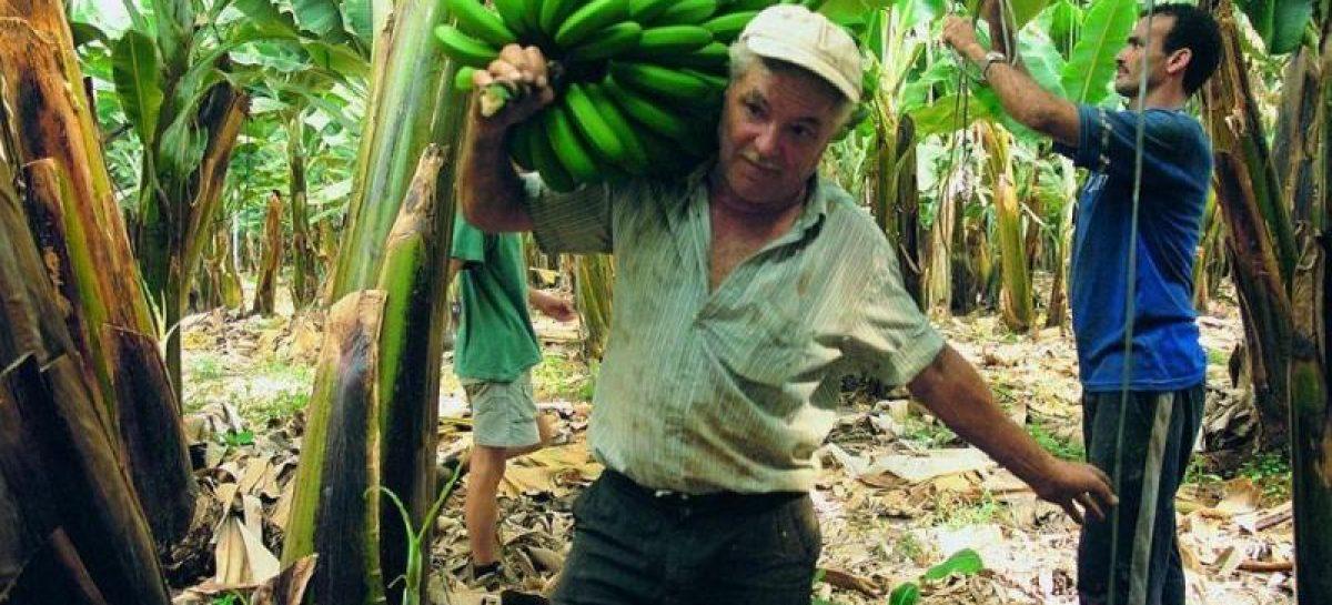 Sancionan ley de régimen especial para trabajadores bananeros
