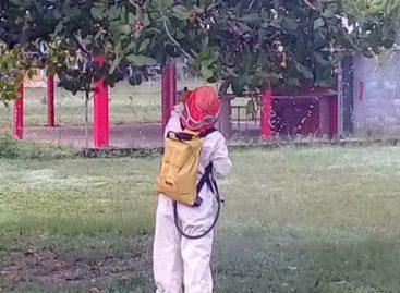 Por enjambre de abejas africanizadas suspenden clases en escuela de San Bartolo