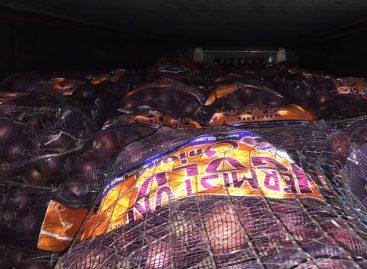 Retienen dos contenedores con más de 55 mil kilos de cebollas germinadas