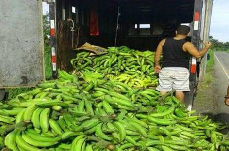 Decomisan 25 mil plátanos de contrabando en Bocas del Toro