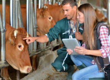 Panama exportará a China primer cargamento de carne de  vacuno