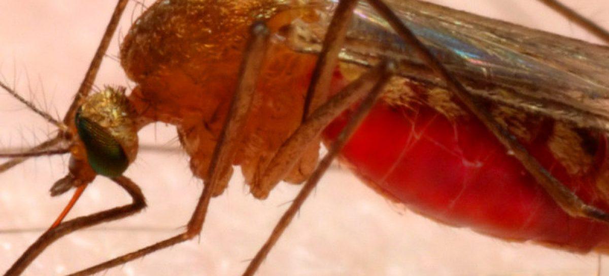 Se contabilizan 376 casos de malaria en Panamá en lo que va de 2019