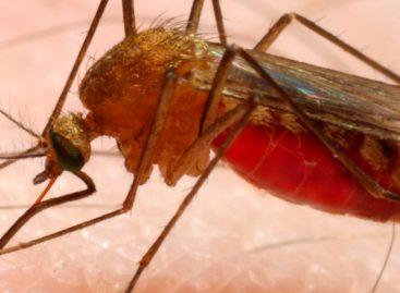 Minsa ofreció detalles sobre paciente con malaria que vino de Venezuela