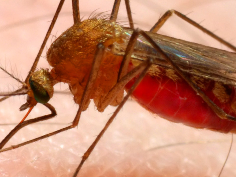 malaria en Panamá