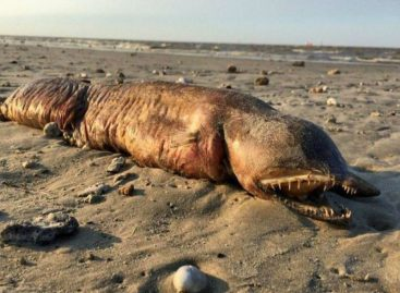 La monstruosa criatura hallada en playa de Texas tras huracán Harvey