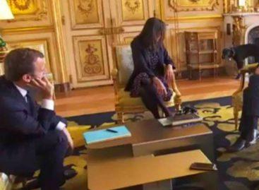 El perro de Macron se orinó en plena reunión ministerial (VIDEO)