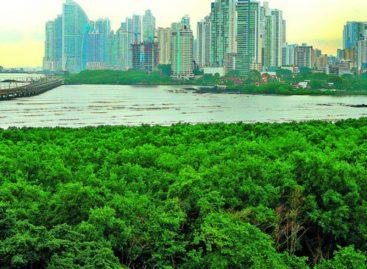 Destrucción de manglares hace más vulnerable a Panamá
