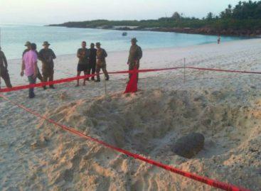 Encontraron otras dos bombas en isla Iguana: Son cuatro en un mes