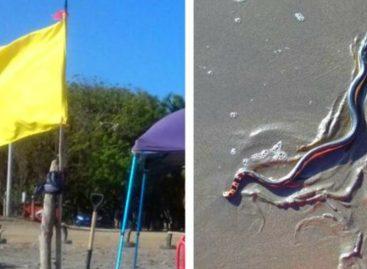 Levantan bandera amarilla en playa Monagre por presencia de serpientes marinas
