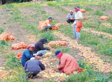 Productores de cebolla de Tierras Altas de Chiriquí regalaron sus productos en protesta