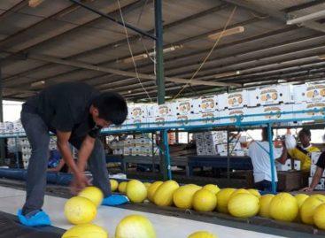 Agroexportadores de Azuero denuncian que Gobierno les debe 3 millones de dólares