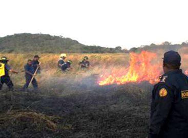 Al menos 2374 incendios de masa vegetal en Panamá en lo que va de año