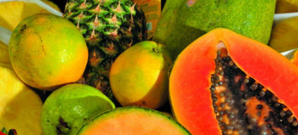 Oficina de Panamá en Rotterdam promueve exportaciones de piña y cítricos