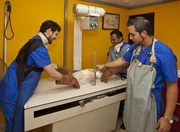Varela sanciona ley que modifica ejercicio de la medicina veterinaria en Panamá
