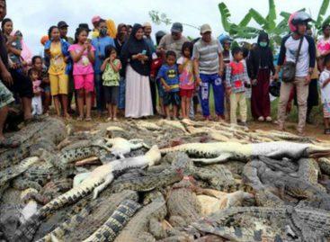 En Indonesia mataron a 292 cocodrilos en peligro de extinción para «vengar» muerte de un hombre