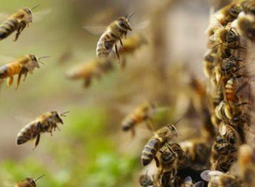 Ingeniero forestal murió tras saltar a un abismo en Manzanares tras ataque de abejas