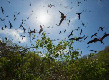 Isla Bona podría convertirse en un refugio de aves marinas