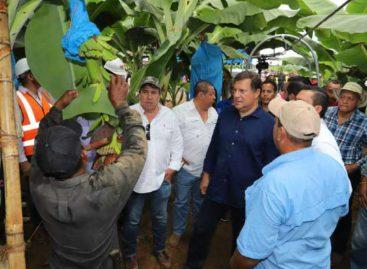 Reactivación de zonas bananeras del país potenciará exportaciones