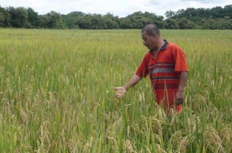 El 20 de agosto inicia proceso de pago a productores