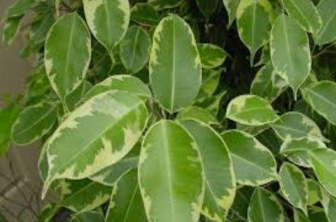 Científicos descubren una nueva planta en Chiriquí