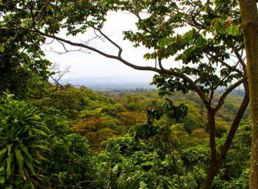 Panamá entre los diez países que más ha perdido selva o árboles