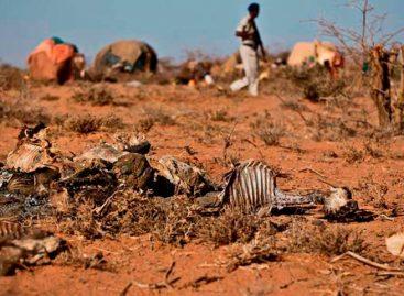 Sequía en Somalia pone en riesgo de malnutrición a un millón de niños