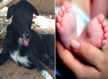 El perro «héroe»: A pesar de su discapacidad rescató a bebé enterrado «vivo»