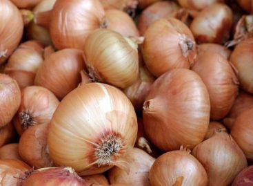 Arribaron al país 12 contenedores con 550 quintales de cebolla