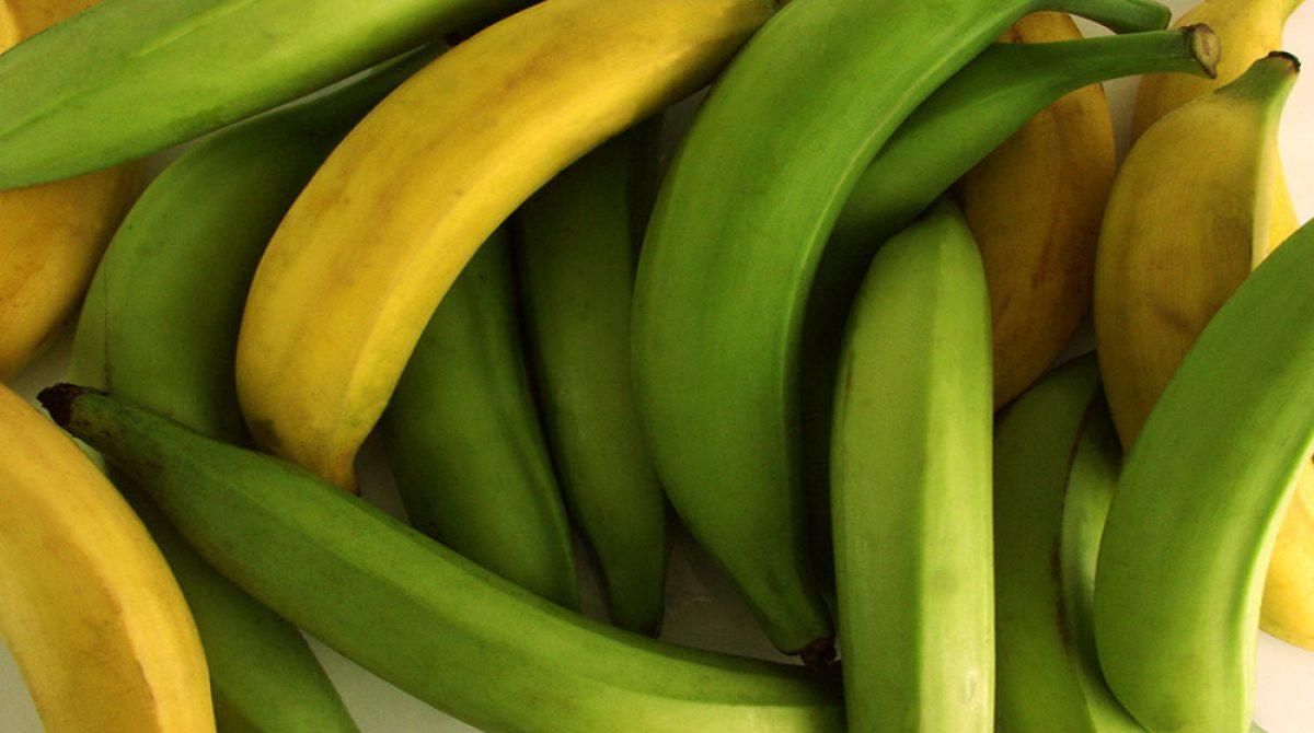 Por brote de hongo se prohibirá ingreso de banano y plátanos desde Colombia