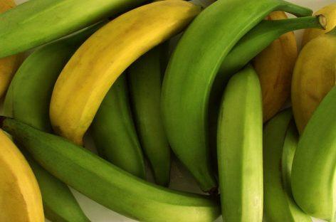 Investigarán contrabando de plátanos en Bocas del Toro