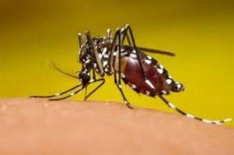 Herrera se convierte en la segunda provincia con más casos de dengue