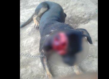 Sucedió en el Distrito Las Palmas: Delincuentes mataron a machetazos a perra que intentó evitar un asalto