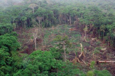 Denuncian avance «vertiginoso» de la deforestación en Panamá