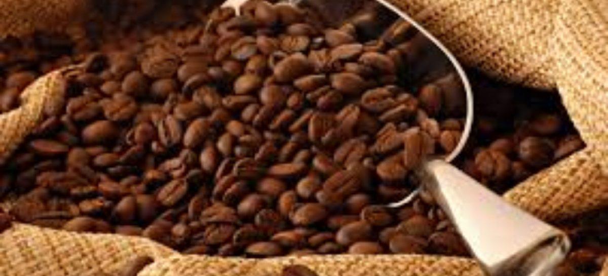 Récord mundial para Panamá: Logran vender un kilo de café en $10 mil en Dubái