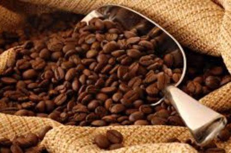 Advierten sobre crisis en producción del café