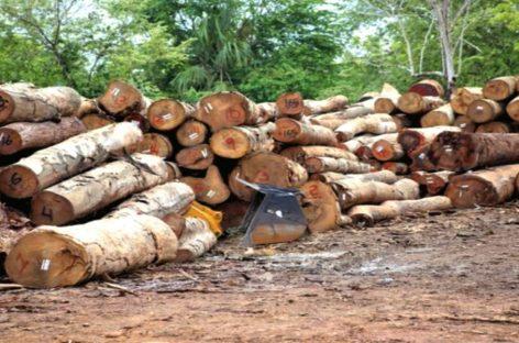 Comisión de la AN investigará tala en la selva de Darién