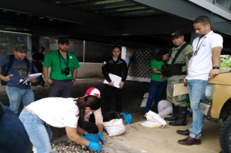 Detenidas dos personas que extrajeron más de 1.000 huevos de tortugas marinas en Tonosí
